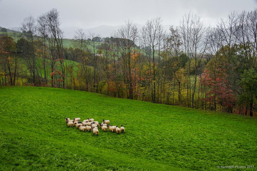 Una vuelta por alpens descubriendo los caminos ganaderos for Piscinas naturales montseny