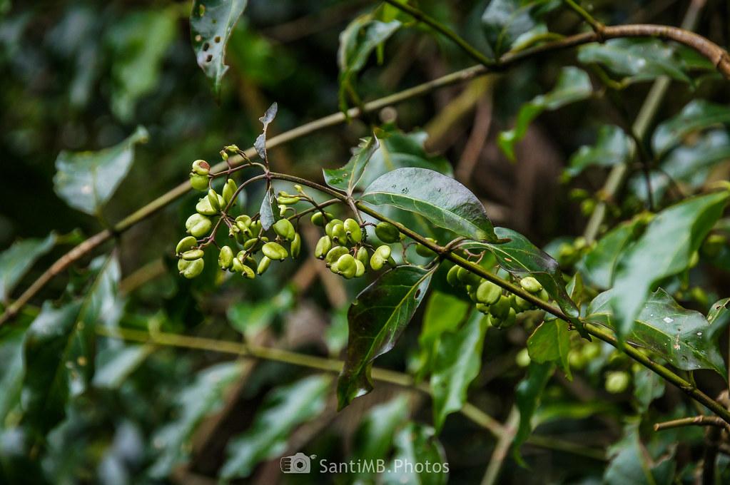 Fascinante flora
